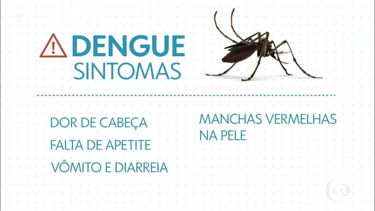 MG: BH tem mais casos de dengue em 2020 que na epidemia de 2019